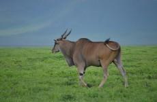 3-Day Ngorongoro, Tarangire & Lake Manyara Safari