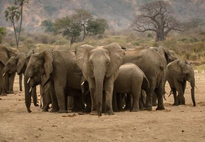 3-Day Serengeti & Ngorongoro Private Tour
