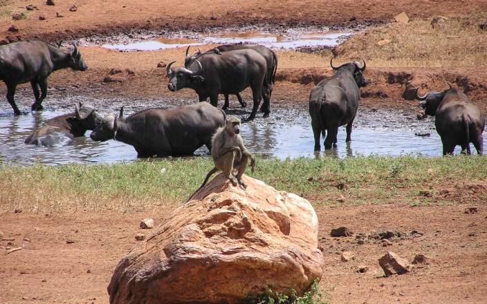 Tsavo East National Park 005