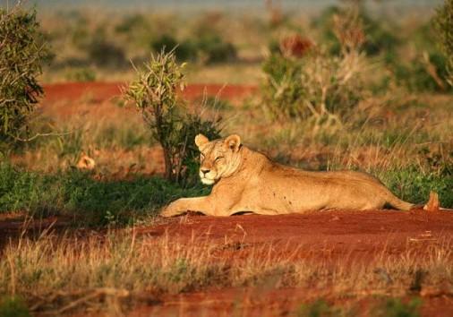 Tsavo East National Park 006