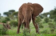 7-Day Amboseli, Masai Mara & Lake Naivasha Safari