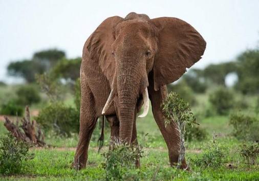 Tsavo East National Park 021 (1)
