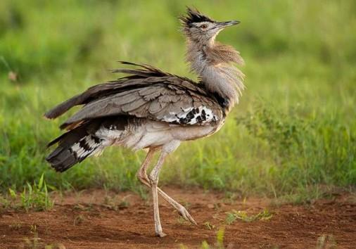 Tsavo East National Park 024
