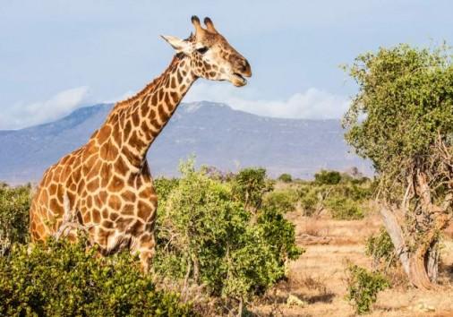 Tsavo East National Park 028