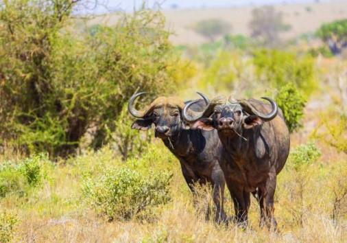Tsavo East National Park 029