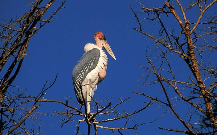 Tsavo West National Park 004