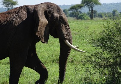 4-Day The Best of the Northern Zone Safari
