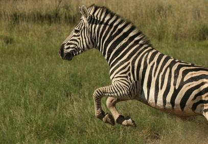 4-Day Serengeti & Ngorongoro Lodge Safari