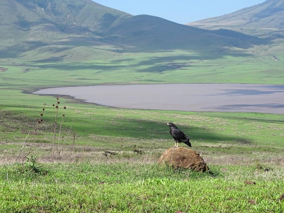 Ngorongorooo