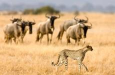 6-Day Majestic Tanzania Mid-Range Safari