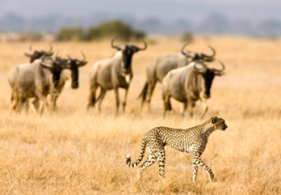 6-Day Majestic Tanzania Mid-Range Safari