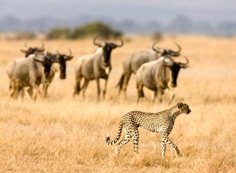 Sidebar Tanzania Wildlife