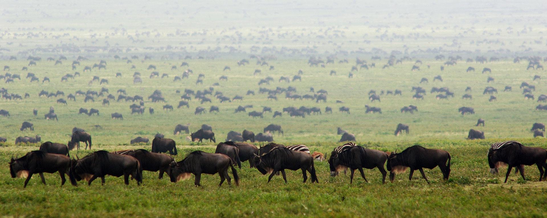 Southern Serengeti3
