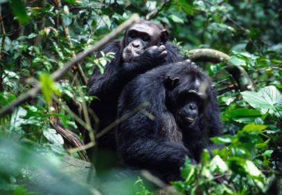 4-Day Uganda Gorilla Trekking Fly-in Safari