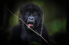 10-Day Uganda Gorilla and Kenya Safari