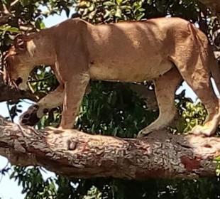 3 Days Queen Elizabeth National Park Safari