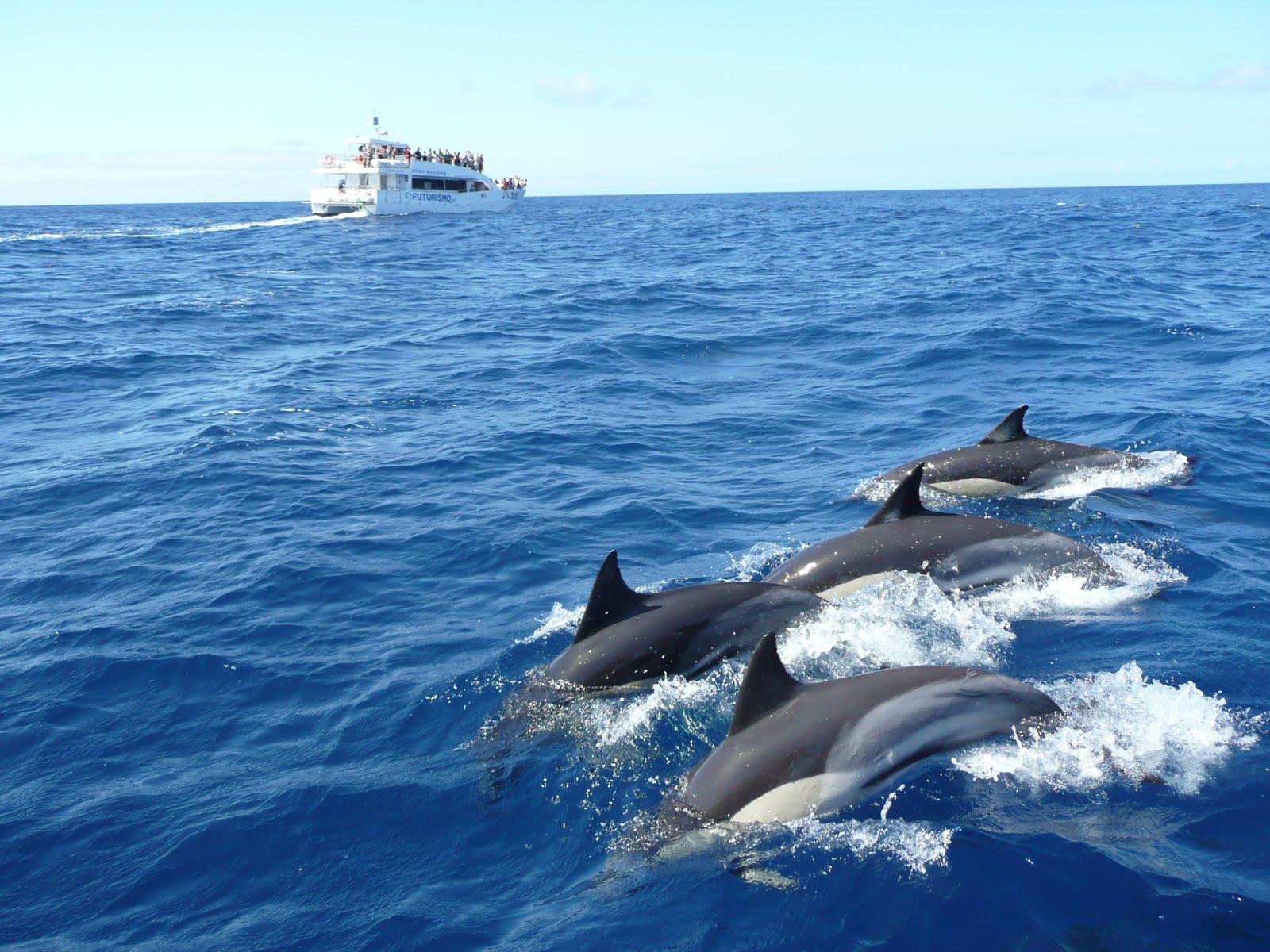 Mirissa Dolphin