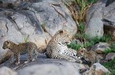 5 Days Safari Tarangire, Ngorongoro Crater, Serengeti and Lake Manyara