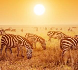 4 Days Safari Serengeti National Park and Ngorongoro Crater