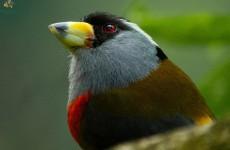 15-Day Colombia Bird Photography Safari