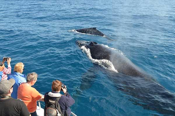 Whale Watching Mirissa Sri Lanka