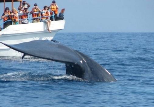 Whaleanddolphinwatchinginmirissa