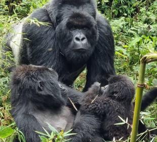 4 Days Rwanda Safari Gorilla & Golden Monkey Trekking