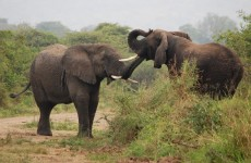 6 Days Rwanda Akagera Safari & Gorilla Trekking