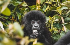 5 Days Remarkable Rwanda Tour