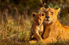3 Days Kenya Masai Mara Safari