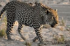 4-Day Private Serengeti, Ngorongoro & Tarangire Safari