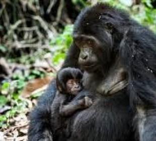Special Offer – 9-Day Adventure Safari in Uganda