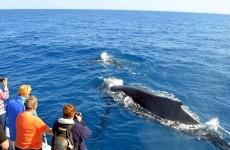 7 Days Sri Lankan Big Five, Wildlife & Whales
