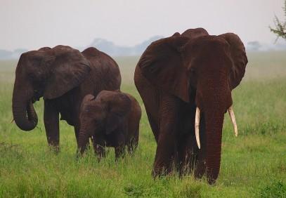 3 Days Serengeti and Ngorongoro Camping Safari