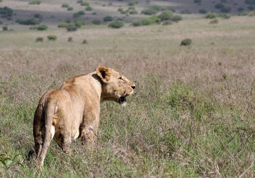 1200px Nairobi National Park, Kenya (32570316676)