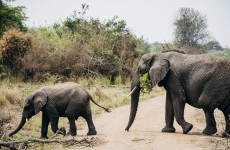 2 Days Akagera National Park Safari