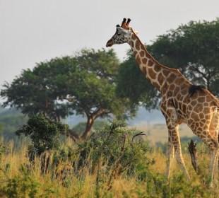 6-Day Best of Kenya Masai Mara, Lake Nakuru, Amboseli