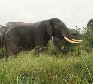 Special Offer – 3 Days Queen Elizabeth National Park Safari