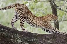 4-Day Serengeti, Ngorongoro & Lake Manyara Group Safari