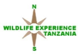 Wildlife Experience Tanzania