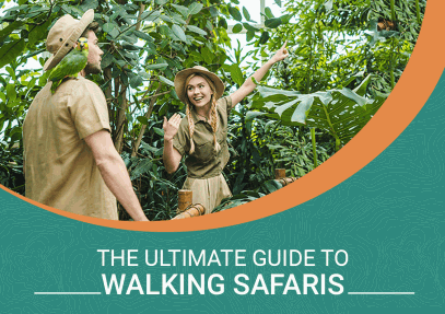 The Ultimate Guide to Walking Safaris