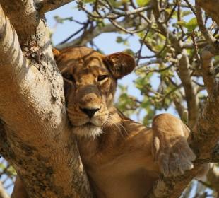 14 Days Wildlife Uganda Safari