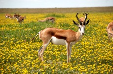 4 Days Lake Manyara, Serengeti and Ngorongoro Crater