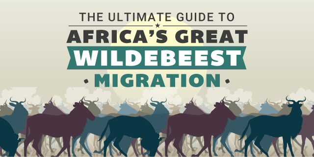 The Ultimate Guide to Africa's Great Wildebeest Migration