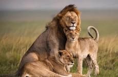 6 Days Maasai Mara, Amboseli and Lake Naivasha Safari