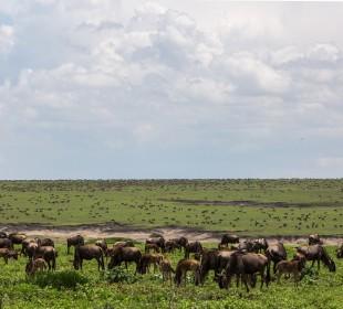 5 Days Safari Serengeti, Ngorongoro & Tarangire