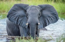 3 Days Tarangire, Manyara, Ngorongoro Camping Safari