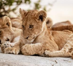 3-Day Camping Safari to Tarangire, Ngorongoro & Lake Manyara