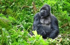 Special Offer – 3 Days Rwanda Gorillas and Golden Monkeys