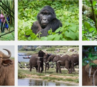 10 Days Wildlife Highlights of Uganda